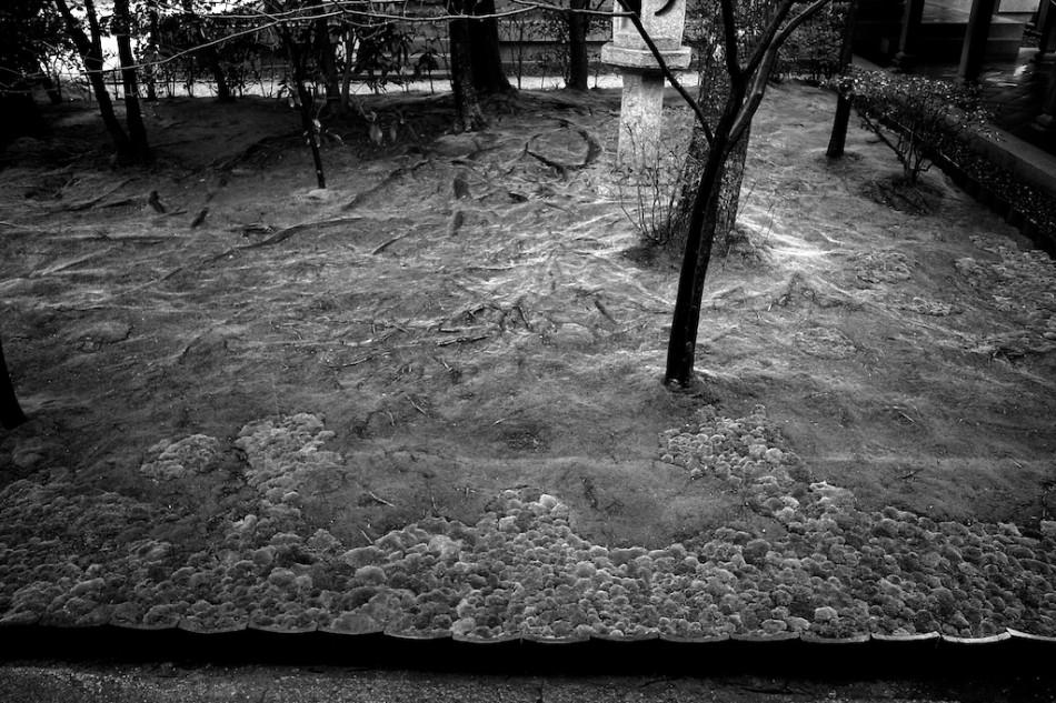 11 - Le Jardin de Mousses, Kyoto