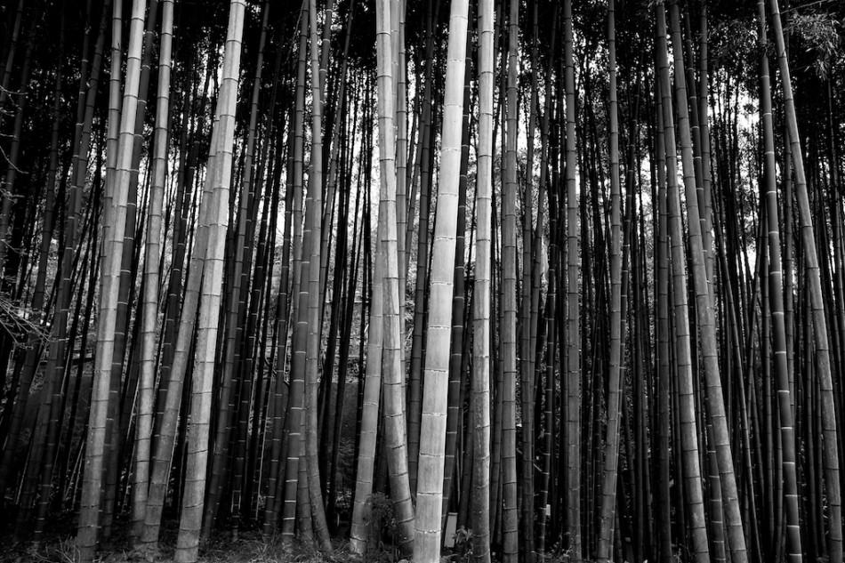 16 - Kyoto