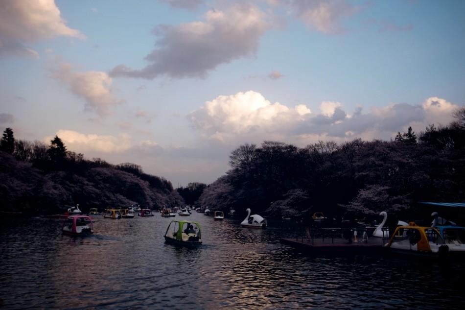 22 - Hanami sur l'eau, Tokyo