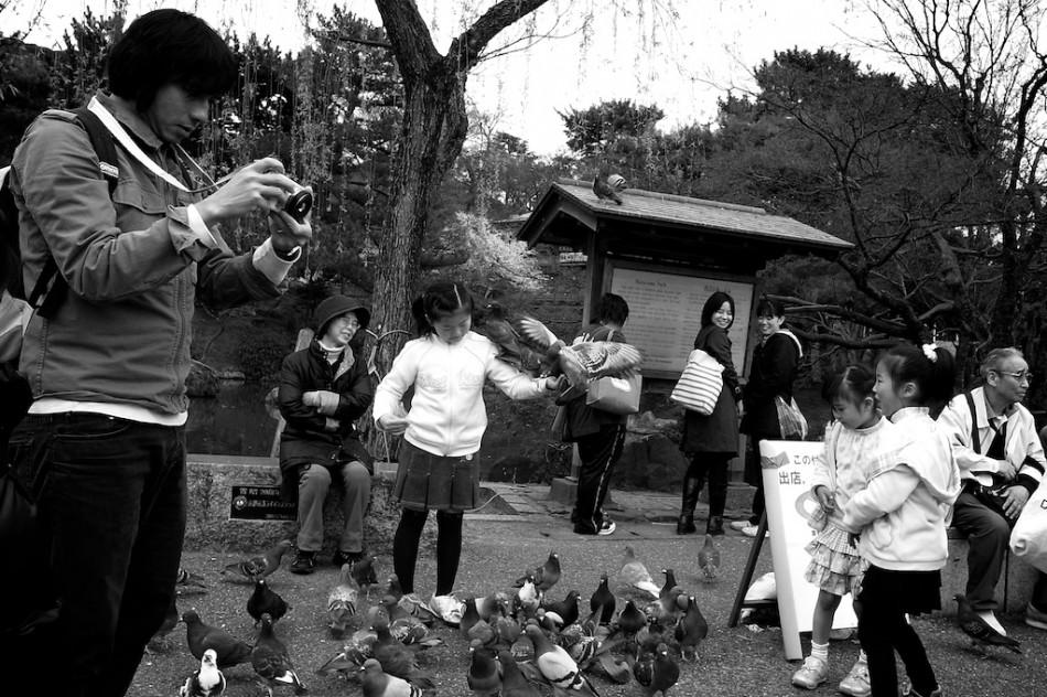 4 - Lorsqu'il y a plein de pigeons et un gamin devant toi... sois patient, ça paye.